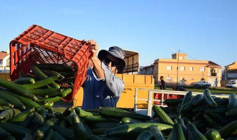 El fin de la campaña agrícola y la COVID-19 bloquean la economía almeriense, según CSIF