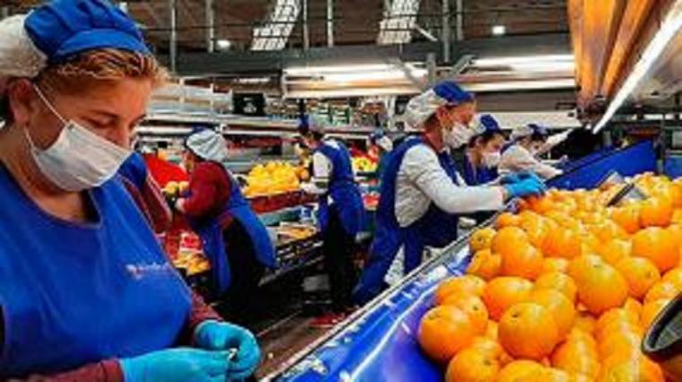 CSIF tilda de desafortunadas algunas instrucciones de la patronal a los trabajadores del manipulado, en concreto, las referentes al uso de mascarillas