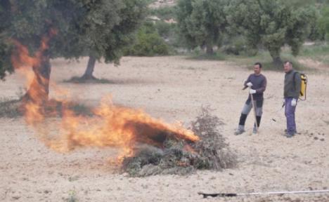 La alcaldesa de Águilas insta al Gobierno Regional a que asuma sus competencias en materia de quemas agrícolas y no aproveche la situación del COVID para trasladar el problema a los ayuntamientos