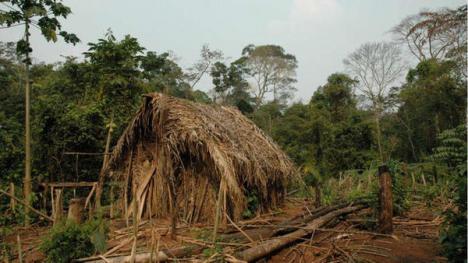 EL HOMBRE DEL HOYO, EL INDÍGENA MÁS SOLITARIO DEL MUNDO   El único superviviente de una tribu amazónica masacrada