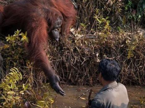 Que el hombre desciende del mono, parece evidente