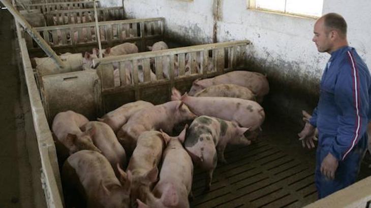 El Pleno del Ayuntamiento de Lorca aprueba por unanimidad la adecuación de distancias para explotaciones porcinas