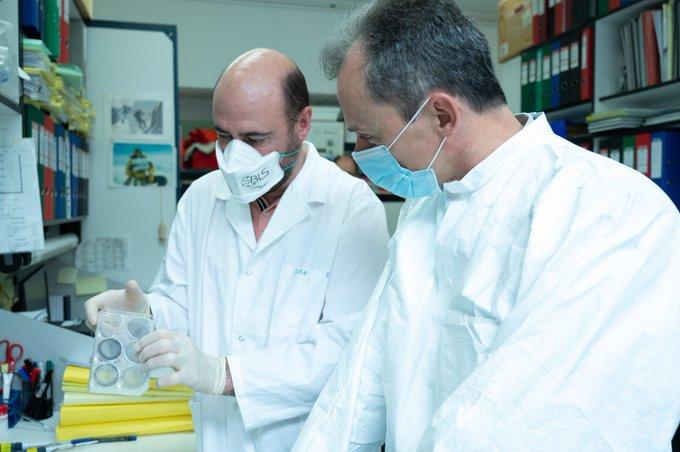 Investigadores españoles iniciaran la próxima semana ensayos preclínicos del coronavirus con animales