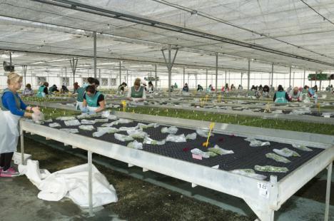 El Ayuntamiento de Puerto Lumbreras solicita al Gobierno de España ayudas para paliar las consecuencias económicas de la crisis sanitaria sobre el sector de la flor cortada y planta ornamental