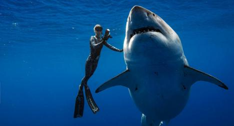 Avistado un tiburón peregrino, al norte de la isla de Cerdeña