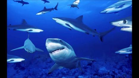 Roban un tiburón en un acuario y lo ocultan en un cochecito de bebé para llevárselo