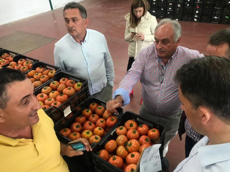 El PP anima a los jóvenes agricultores lorquinos a beneficiarse de la nueva línea de 9,7 millones de euros para la creación de empresas agrarias