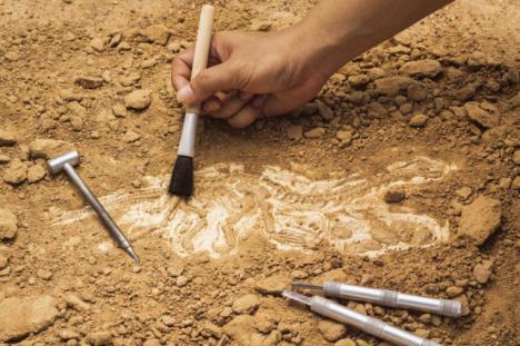 Nuevos descubrimientos arqueológicos