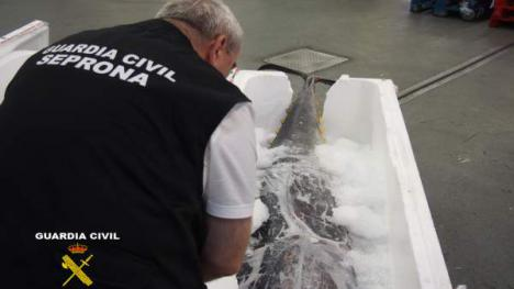 La Guardia Civil requisa 440 kilos de atún rojo 'no aptos para el consumo humano'