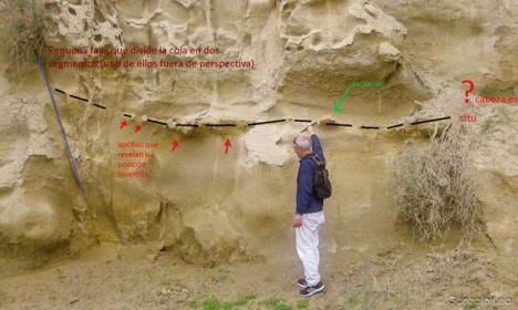 La ballena de Viator y ahora el descubrimiento de una nueva ballena fósil del Plioceno en las afueras de Almería