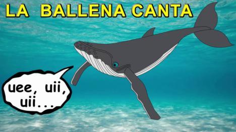 CUANDO CANTAN DE LAS BALLENAS