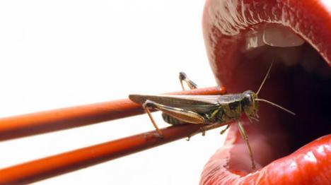 ¿Pueden llegar a ser los insectos la mayor fuente de proteínas en nuestra alimentación?