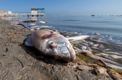 El PSOE denuncia que el Gobierno regional está incumpliendo la ley del Mar Menor
