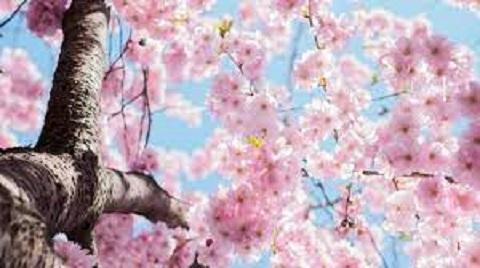 ¡Feliz Primavera. Que sea un camino hacia la gran belleza! por María Antonia García, Abogada