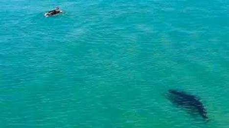 Un dron salva en Australia a un surfista del ataque de un tiburón