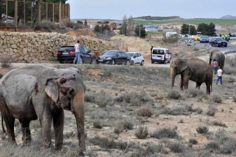 El accidente de un camión con elefantes provoca el corte de la A-30