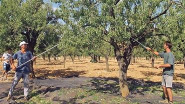 Reflexiones y reivindicaciones de Pepe López, el agricultor olivarero tradicional de montaña ecológico, de Cambil, Arbuniel, Sierra Mágina...