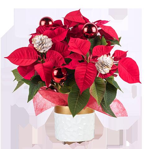 Flores rojas para regalar y decorar tu hogar en Navidad