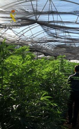 Dos detenidos en Pechina (Almería) después de que la Guardia Civil descubriera una plantación de marihuana