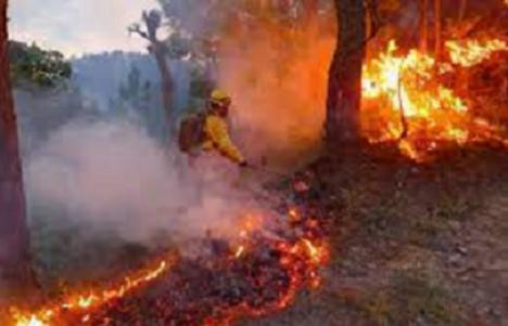CSIF lamenta el fallecimiento del bombero forestal que participaba en las labores de extinción del incendio de Sierra Bermeja