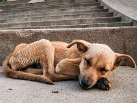 Un hombre ha sido detenido en València por patear a su perro y amenazar con una navaja a varias personas