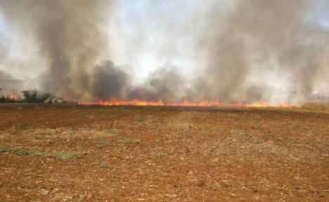 Pegaron fuego en un campo de cereal y se largaron al ver las llamas