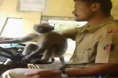 El mono conductor
