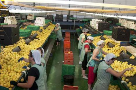 CSIF valora positivamente que la reactivación de la industria agroalimentaria salve el desempleo en Almería
