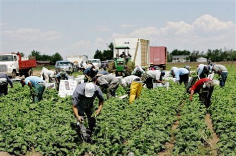 El Gobierno de España aprueba medidas urgentes para favorecer la contratación temporal de trabajadores del sector agrario