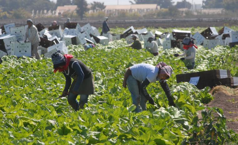 El PSRM señala que el aumento de ayudas para los seguros agrarios por parte del Gobierno de España demuestra su firme compromiso con el sector