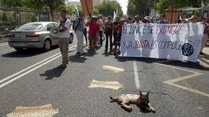 Encuentran a una hembra de lince y a sus dos cachorros ahogados, en Vilches (Jaén)