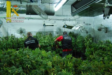 Detenido por cultivar 3.400 plantas de marihuana en El Casar.