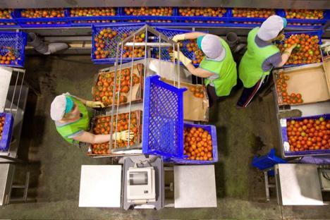 La esclavitud se instala el manipulado de verduras en Almería