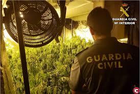 La Policía libera seis personas y desarticula una organización dedicada al cultivo de marihuana