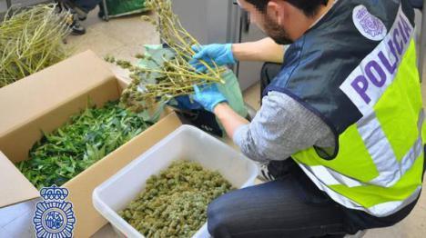 Detenido en Daimés (Elche) un joven de 23 años que se dedicaba al cultivo y distribución de marihuana.