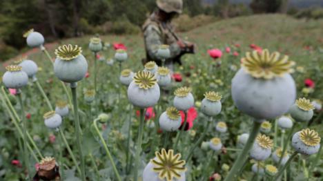 El gobierno mexicano legalizarará las drogas