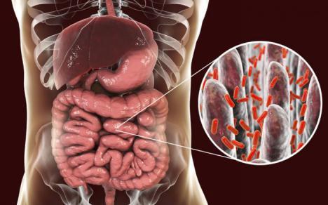 Ciertas bacterias presentes en el intestino tienen efectos positivos sobre el estado de ánimo de las personas