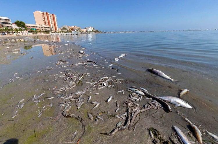 La Comisión Europea asegura a los socialistas que tomará todas las medidas dentro de sus competencias para preservar el Mar Menor