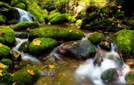 Muniellos, en Asturias, naturaleza en estado puro