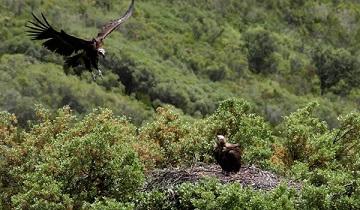 Escapada al Parque Nacional de Cabañeros
