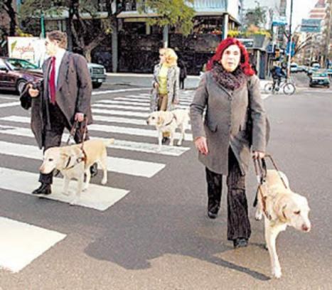 El PP de Lorca propone la creación de nuevos Parques Caninos que presten servicio a los dueños de los más de 16.400 perros censados actualmente en nuestro municipio