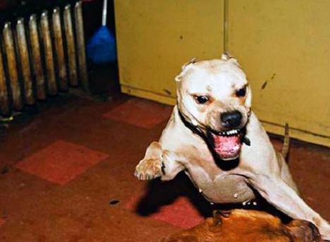 La mujer acusada de matar a su marido y dárselo de comer a sus perros, juzgada