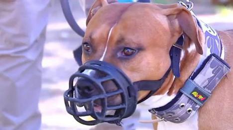 Un perro destroza la cara de un niño de 4 años en Daimuz