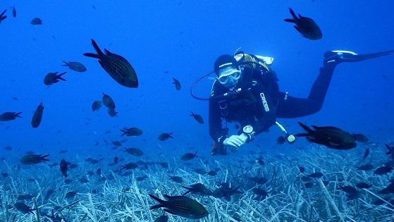 El cambio climático afecta a la producción de plancton en el Mediterráneo, según un estudio reciente