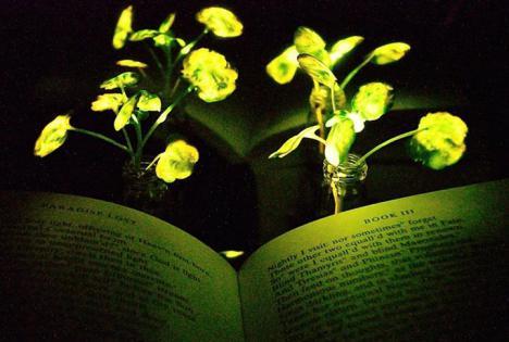 Plantas nanobiónicas que pueden reemplazar en un futuro no muy lejano a la luz eléctrica