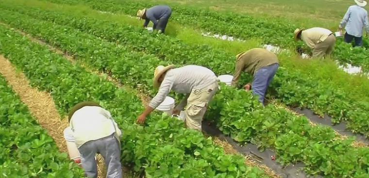 El Gobierno de España destina 4,2 millones de euros para programas de desarrollo rural y agroalimentarios en la Región de Murcia