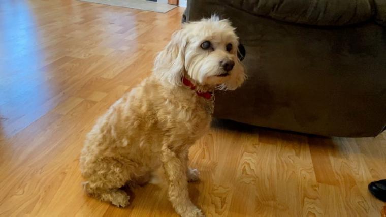 Un hombre le roba el perro a sus vecinos y se lo regala a su novia por San Valentin...luego sería detenido