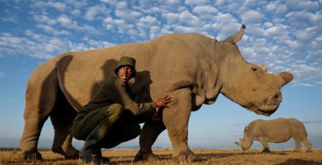 El último macho de rinoceronte blanco que quedaba en el mundo, ha muerto