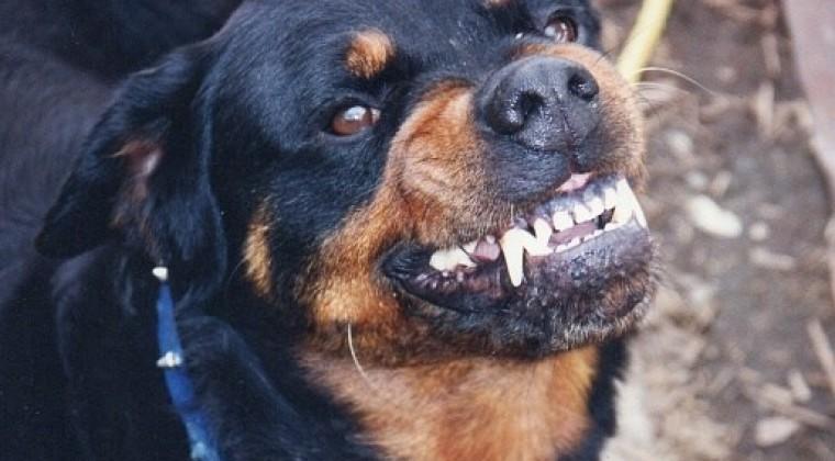 El ataque de un perro de raza peligrosa en Lugones, le destroza la cara a un hombre