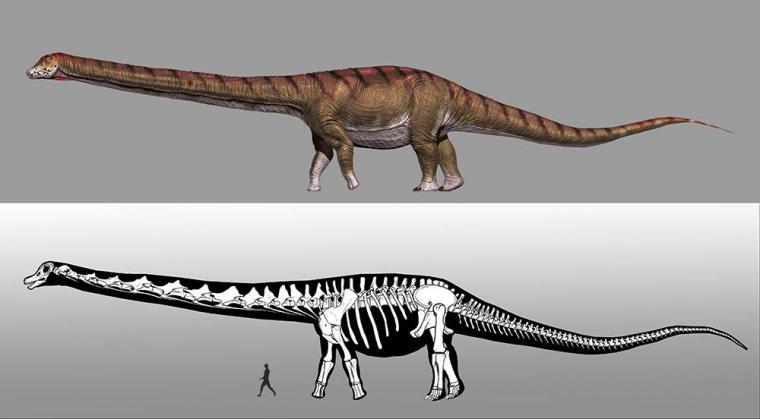 En busca de los restos del mayor titanosaurio que habitó la Tierra